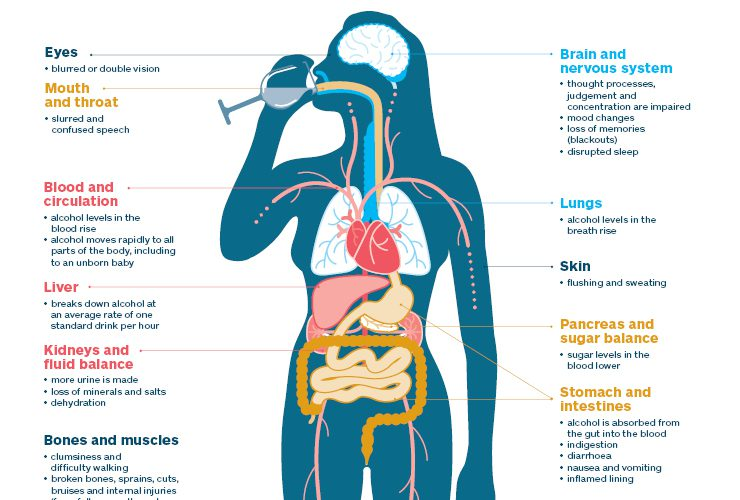 Alcohol's Impact on the Body